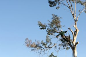 Tree service Long Island ny